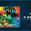 Dolphins 6 Days Collection Image