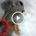 Dead Alien Found In Russia
