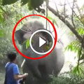 Narrow Escape From Elephant Attack